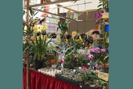 a plant shop